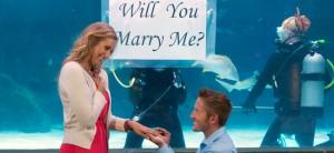 Aquarium Diver Proposal