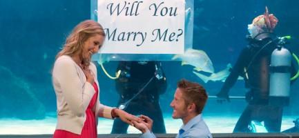 Diver Proposal